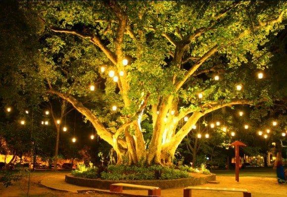 Árbol de la vida  San Bernardino Paraguay